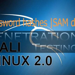 Administrator password hashes from SAM database